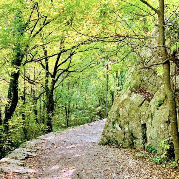 Paklenica Nationalpark Kroatien Wanderweg Wald