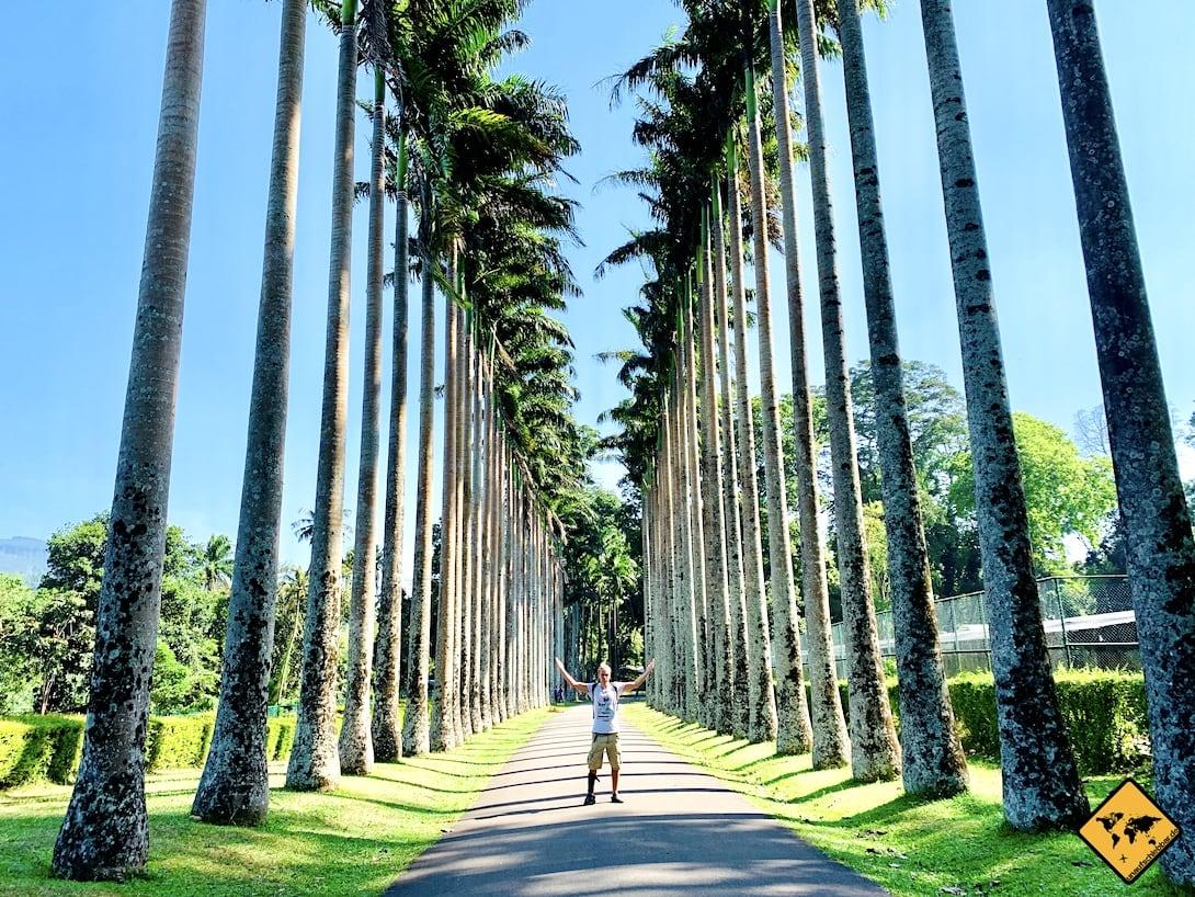 Palmen-Allee botanischer Garten Kandy Sri Lanka