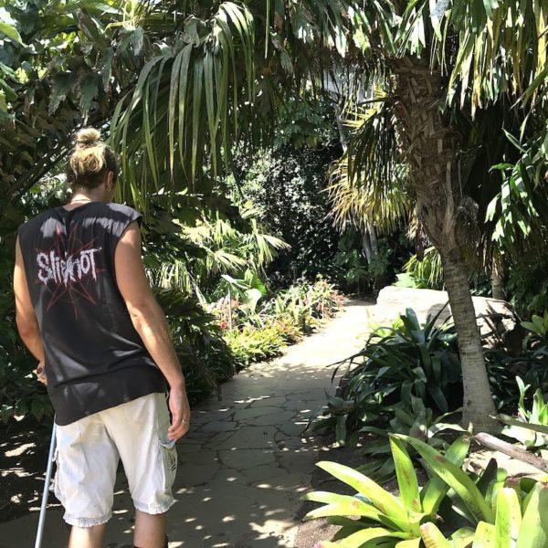 Palmen Pflanzen Santa Cruz de Tenerife Palmetum