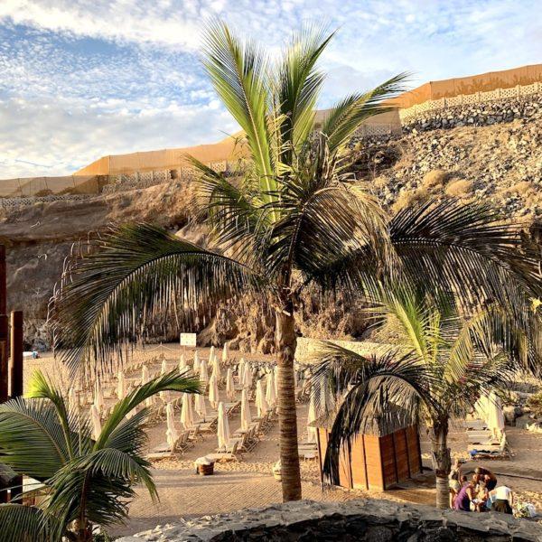 Palmen Playa Abama Teneriffa