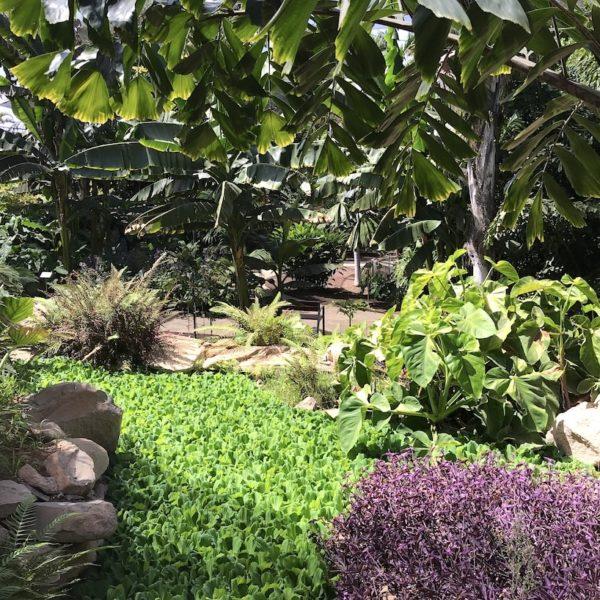 Palmengarten Santa Cruz Pflanzen