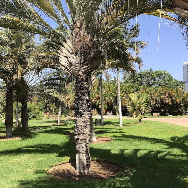 Palmengarten Santa Cruz Teneriffa