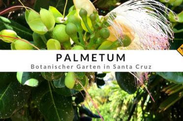 Palmetum Santa Cruz – Europas größte Palmen-Sammlung