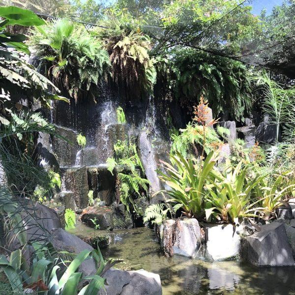 Palmetum Santa Cruz Octogono Wasserfall
