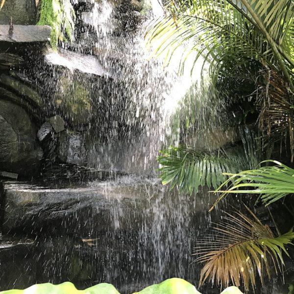 Palmetum Santa Cruz Wasserfall
