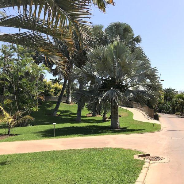 Palmetum Santa Cruz gepflegt