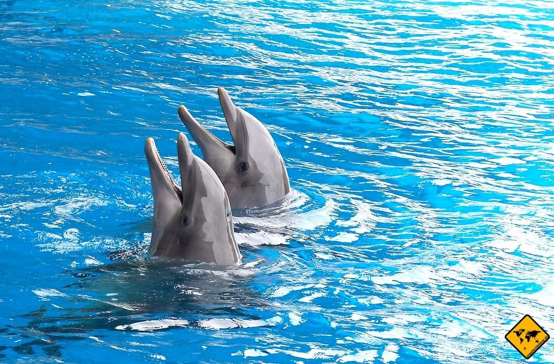 Palmitos Park Gran Canaria Delfinarium