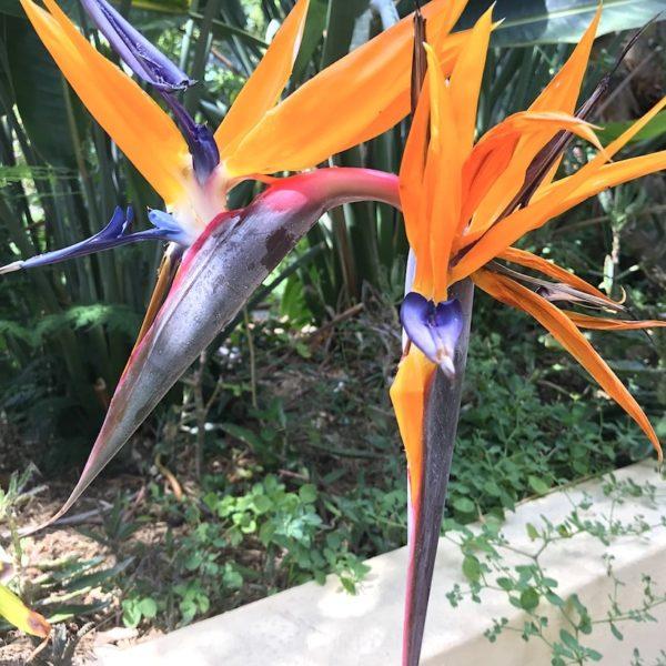 Papageien-Blume Sitio Litre Garten Puerto Cruz