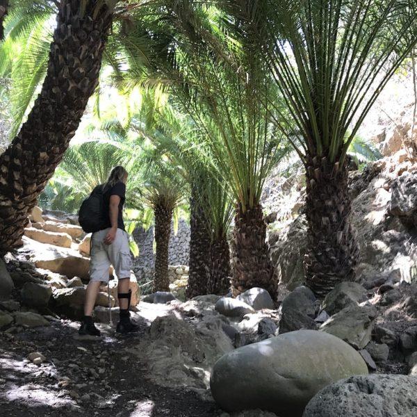 Parque del Drago Icod de los Vinos Palmen Weg