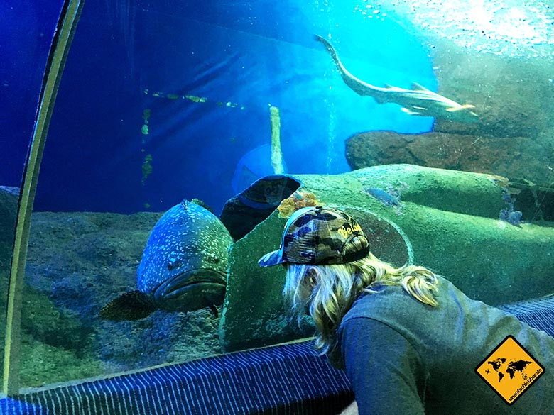 Pattaya Aquarium Tunnel Fisch