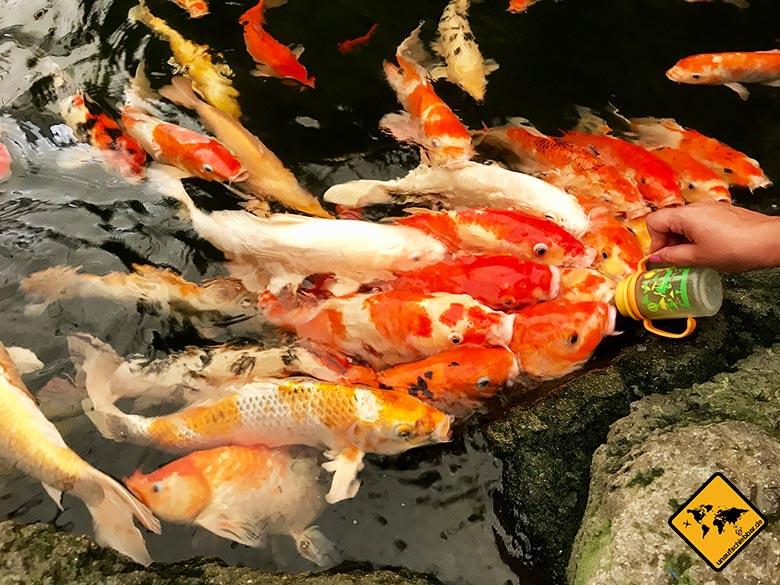 Pattaya Sehenswürdigkeiten Underwater World Koi Karpfen