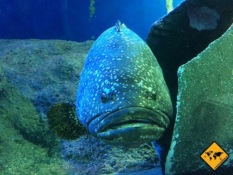 Pattaya Sehenswürdigkeiten Underwater World