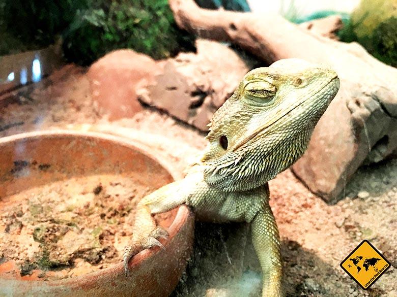 Pattaya Underwater World Gecko