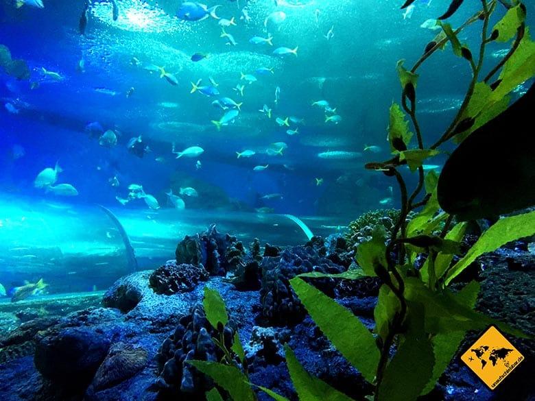 Pattaya Underwater World Tunnel Umrisse