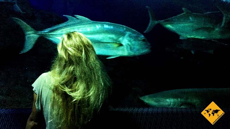 Pattaya Underwater World einheimische Fische