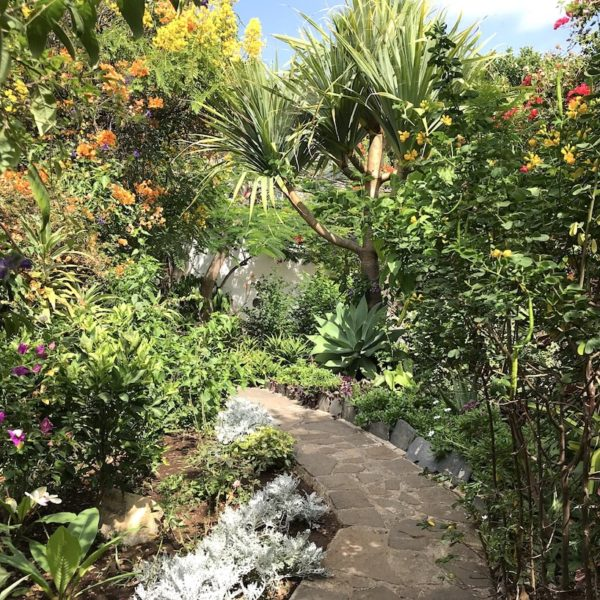 Pflanzen Sitio Litre Garten Puerto Cruz