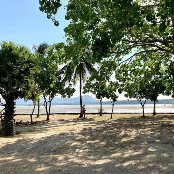 Phuket Bay Bäume