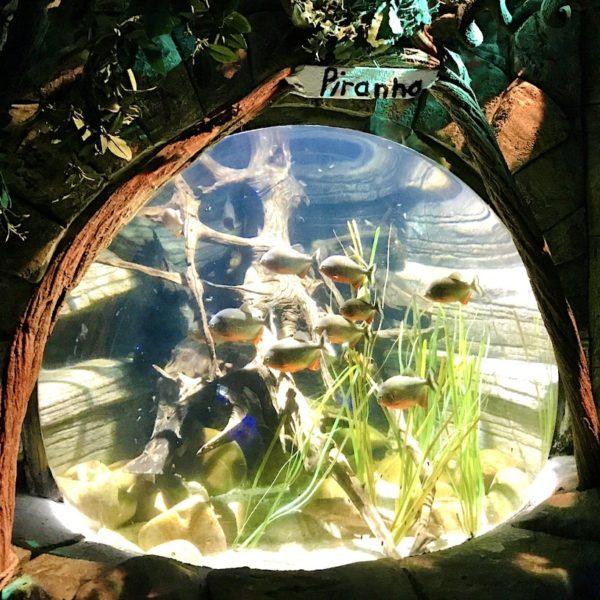 Piranha Becken Unterwasserwelt Oberhausen