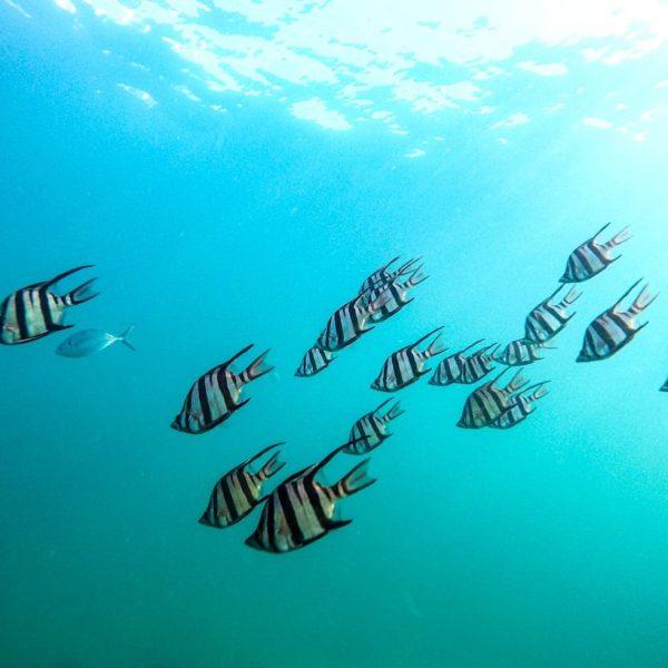 Playa de Papagayo Lanzarote Fische schnorcheln