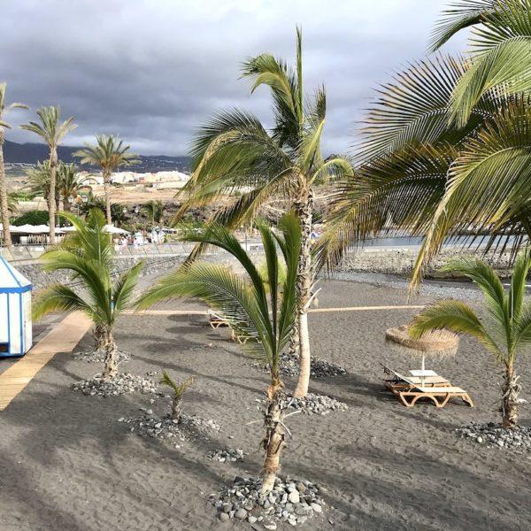 Playa de San Juan Teneriffa Palmen