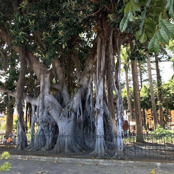 Plaza Andrés de Cáceres Feigenbaum
