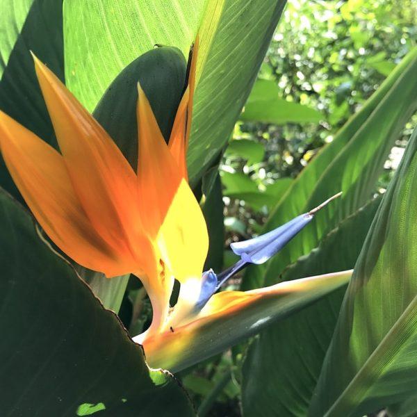 Puerto de la Cruz botanischer Garten Sehenswürdigkeiten Teneriffa