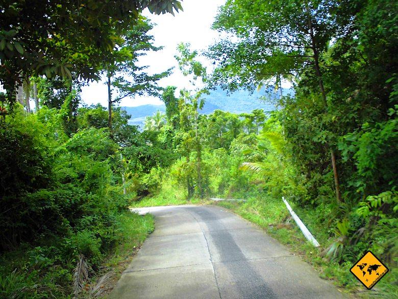 Regenzeit Koh Samui grüne Natur