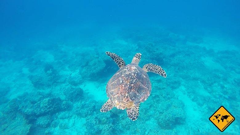 Reise Gadgets GoPro HERO4 Adventure Actionkamera Schildkröte Gilis