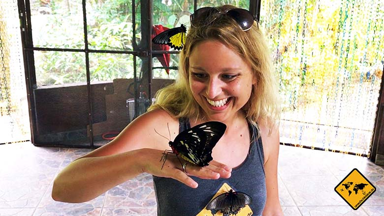 Reisetipps Bali Butterfly Park Tabanan