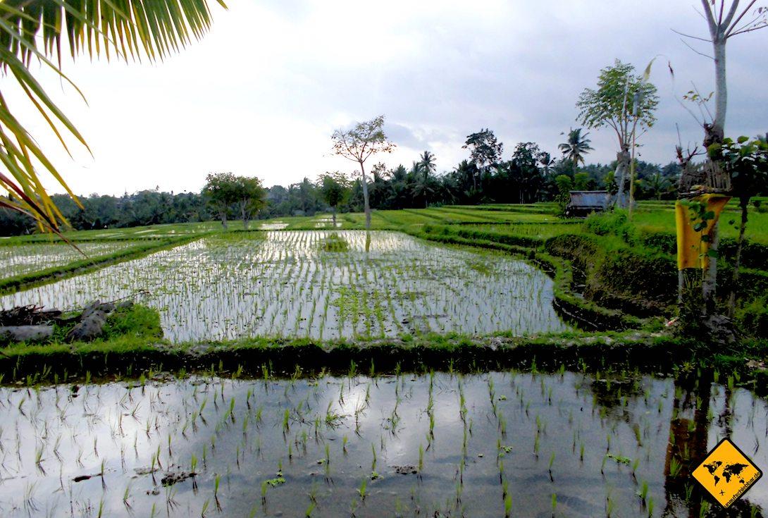 Reisfelder auf Bali Bewässerung