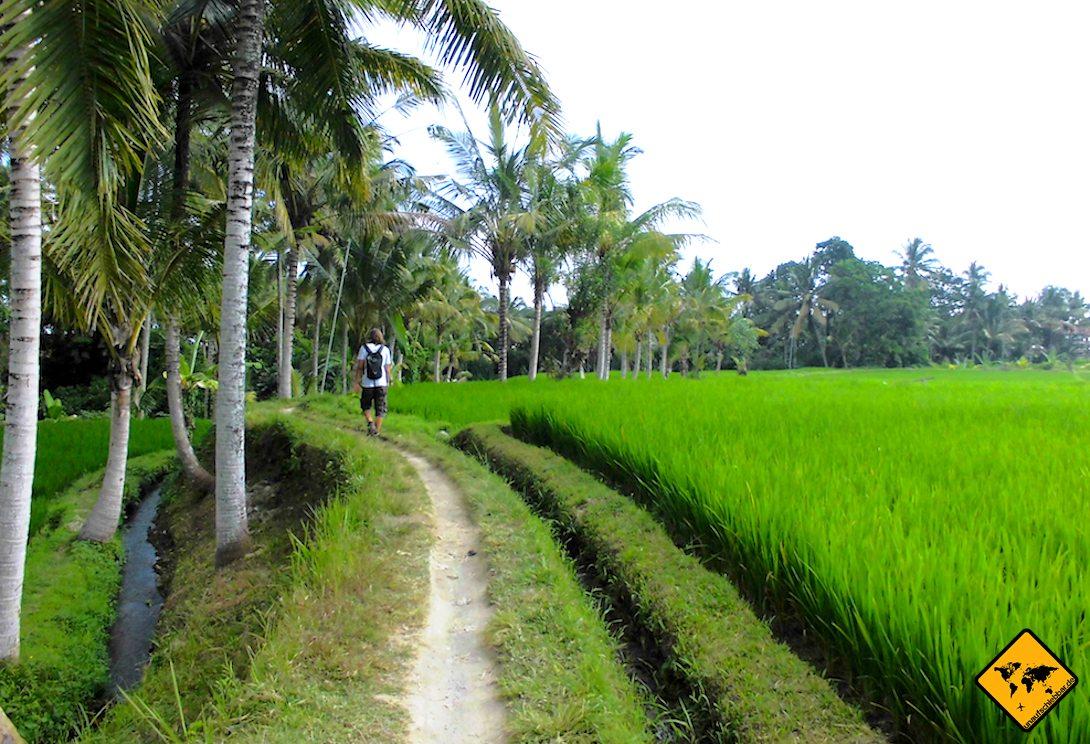 Reisfelder auf Bali Wanderung