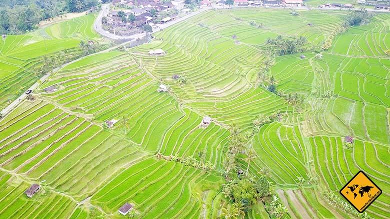 Reisterrassen Jatiluwih Bali Aussichtspunkt