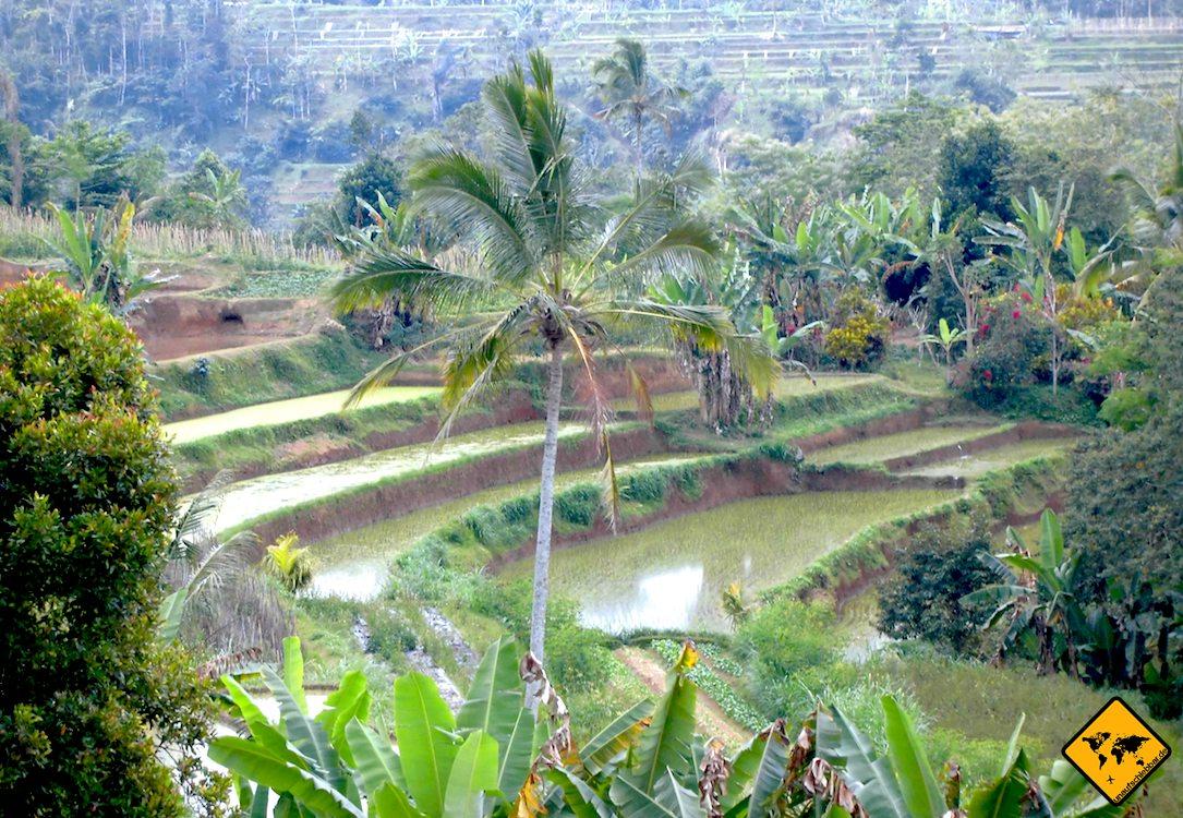 Die Reisterrassen auf Bali besitzen ihre Form, um auch an Hängen gerade Flächen für den Reisanbau zu schaffen