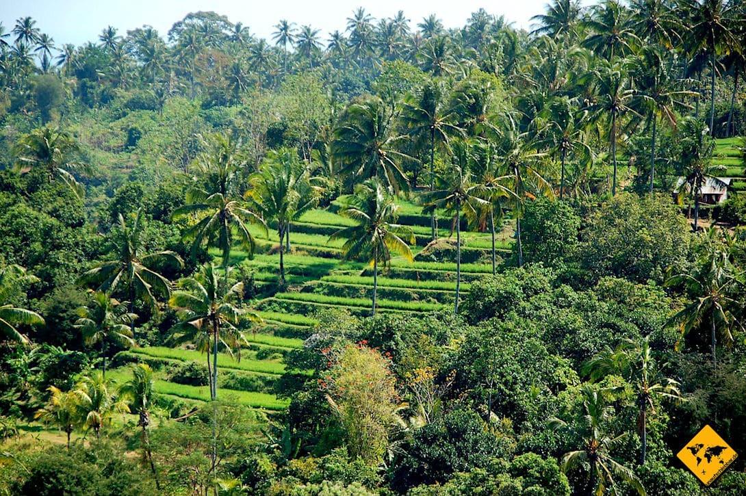 Reisterassen auf Bali top 8