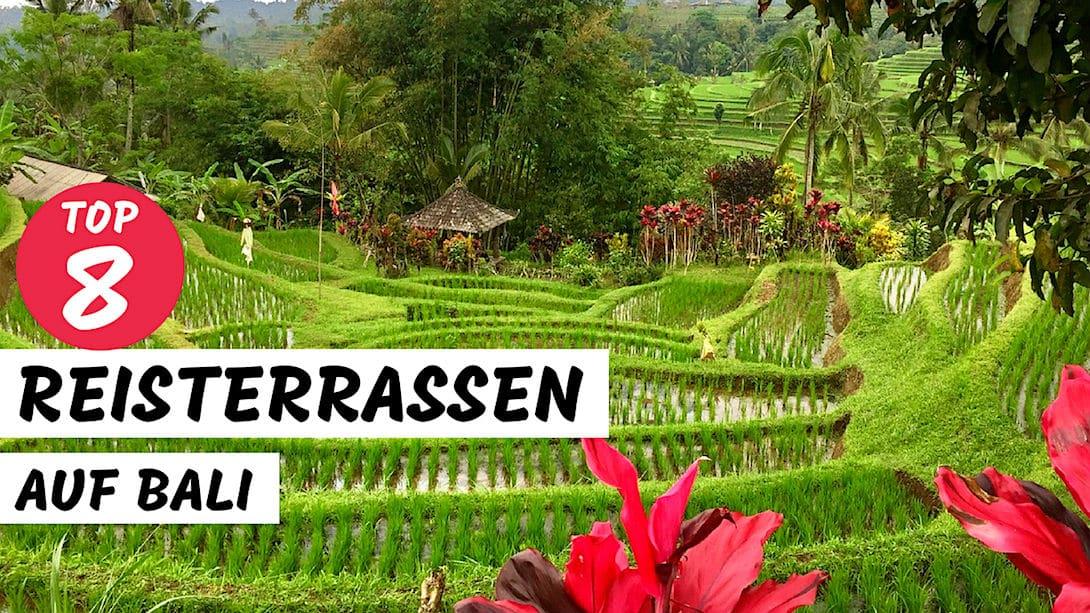 Reisterrassen auf Bali Top 8