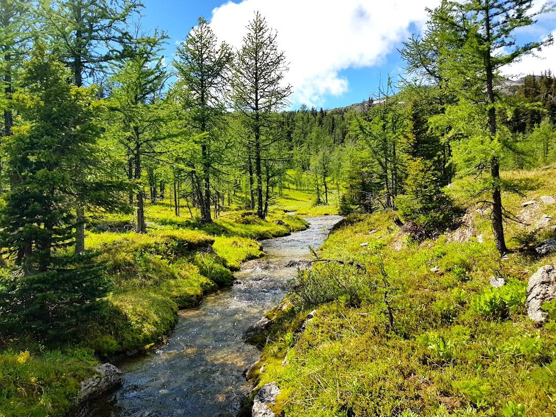 Rocky Mountains Kanada Sunshine Meadows Trail