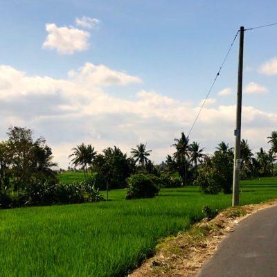 Beim Roller fahren auf Bali erwarten dich häufig schöne Aussichten auf die Reisfelder