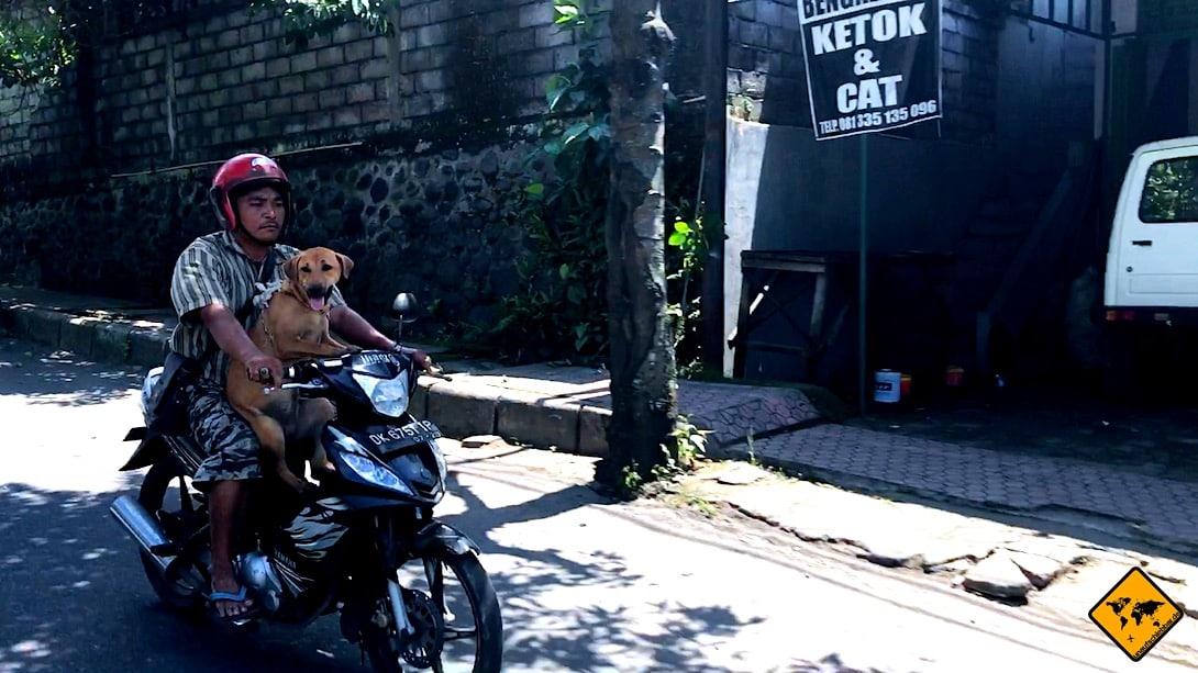 Beim Roller fahren auf Bali solltest du den Indonesiern nicht alles nachmachen, da sie teilweise nicht allzu viel Wert auf Sicherheit legen