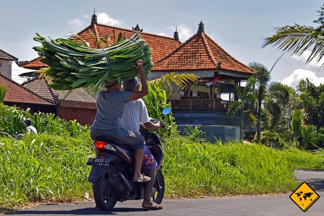 Roller sind auf Bali das Transportmittel Nr. 1. Dabei werden sie oftmals ohne Versicherung vermietet.