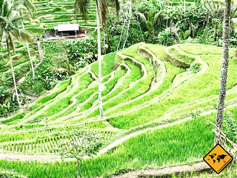 Sakha House Lage Tegalalang Reisterrassen