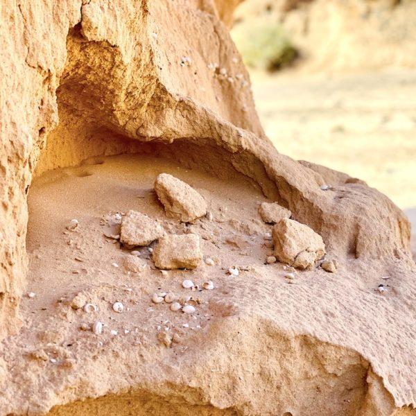 Sandstein Muscheln Barranco de los Enamorados Fuerteventura