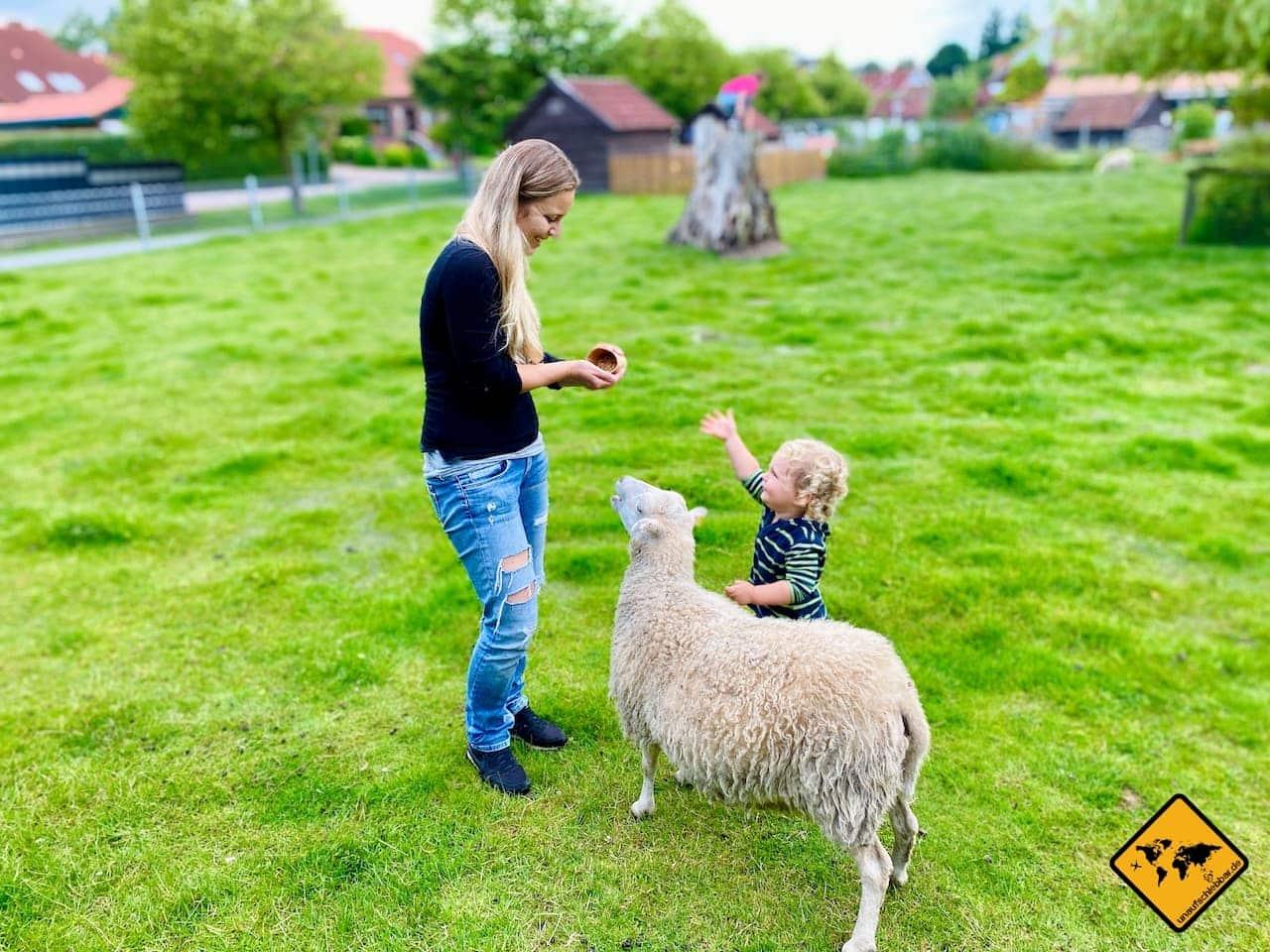 Schaf streicheln füttern Werdum Haustierpark