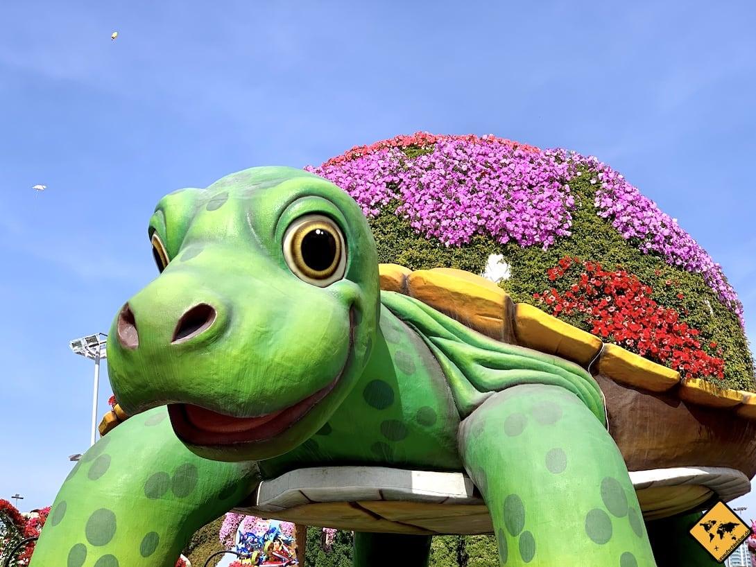 Diese große Schildkröte befindet sich direkt am Eingang zum Miracle Garden