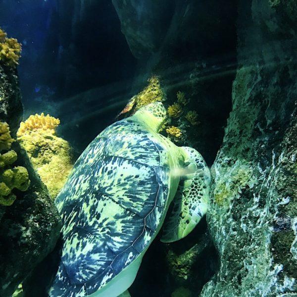 Schildkröte Ozeanbecken Oberhausen Sea Life