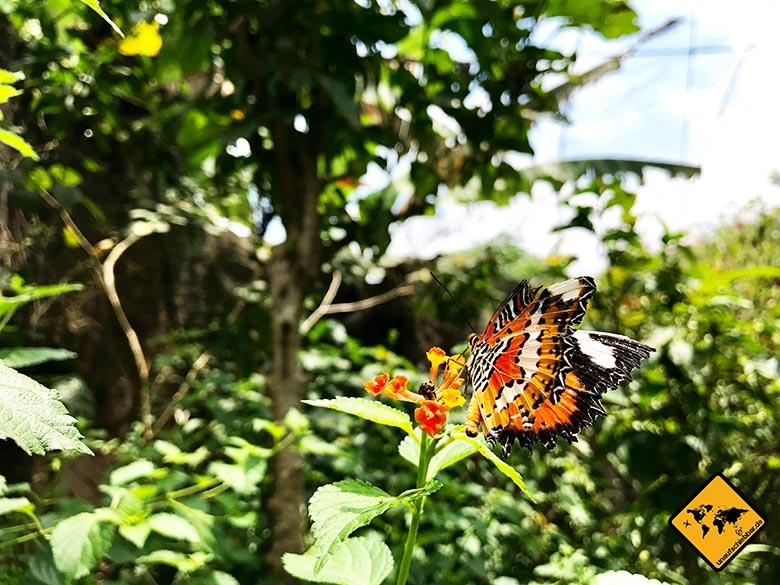 Schmetterling Bali Butterfly Park in Tabanan