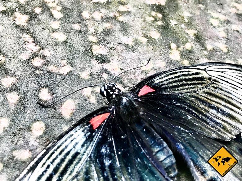 Schmetterlingspark Bali Nahansicht