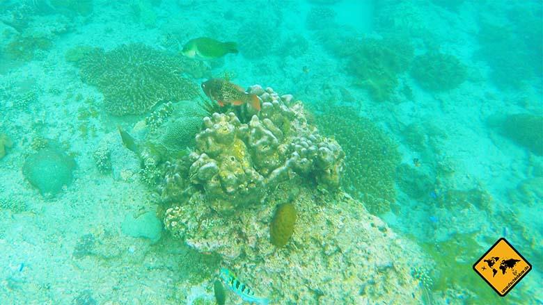 Schönste Strände Bali schnorcheln Blue Lagoon