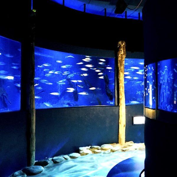 Schwarmring Makrelen