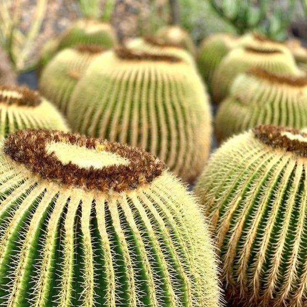 Schwiegermuttersitz Kaktusgarten Lanzarote