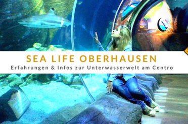 Sea Life Oberhausen – Erfahrungen zur Unterwasserwelt am Centro